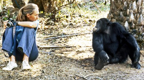 17 rapid-fire questions with Dr. Jane Goodall