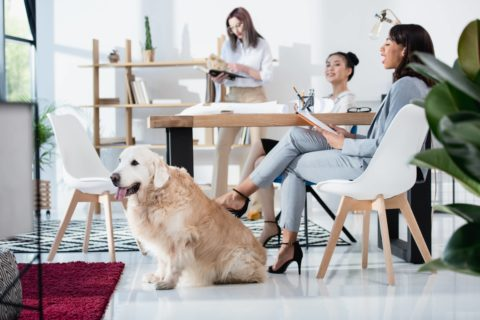 The 3 proven success factors for workplace wellbeing